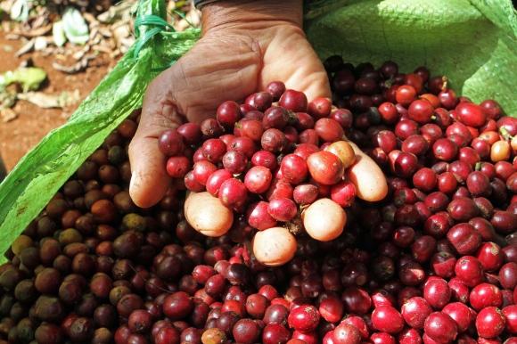 Coffee Making Peru